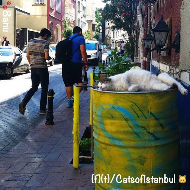 Cats of Istanbul 1