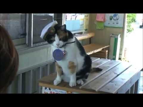 Napustila nas je Tama, mačka šefica željezničke postaje