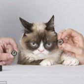 Grumpy Cat u Madame Tussauds