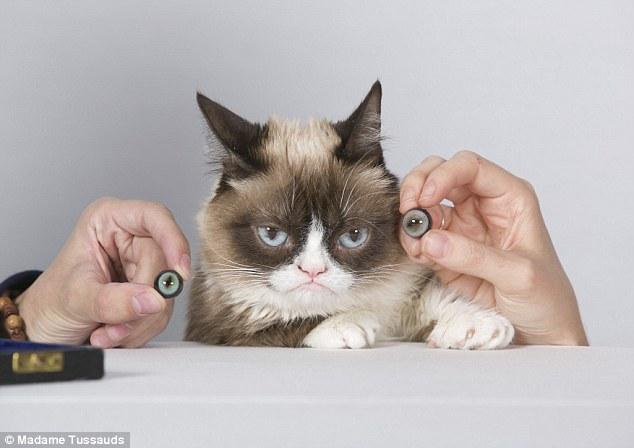 Prva mačka u muzeju Madame Tussauds!
