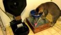 Pogledajte napravu koja povezuje mačje hranjenje i zabavu