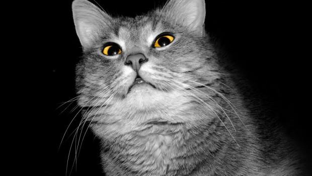 Noćne mačke – Kako zaustaviti noćno ludilo?