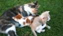 Sjećaju li se mačke majke svojih potomaka?