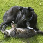 Mačka i pas