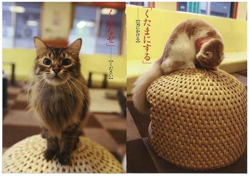 Palača za mačke