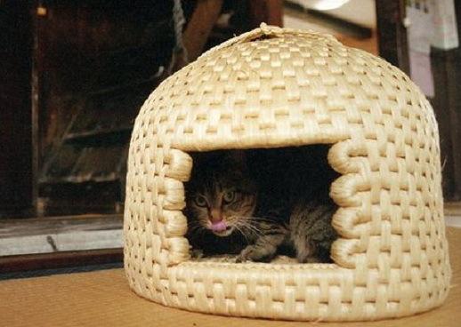 Palače za mačke