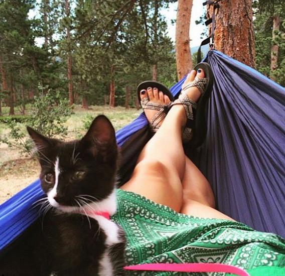Avanturističke mačke