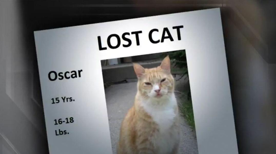 Mačak Oscar