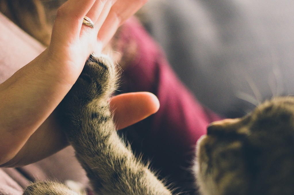 Mačka i vlasnik