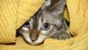 Kako socijalizirati sramežljivu mačku?