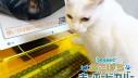 Zaštitite svoju tipkovnicu od mačaka