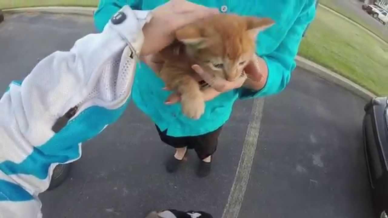 Akcija spašavanja mačića na prometnom križanju