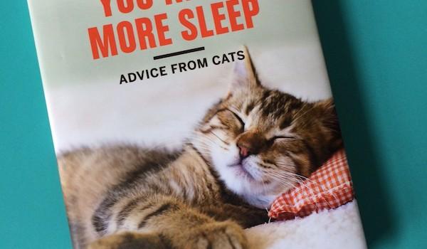 You Need More Sleep – knjiga mačjih savjeta