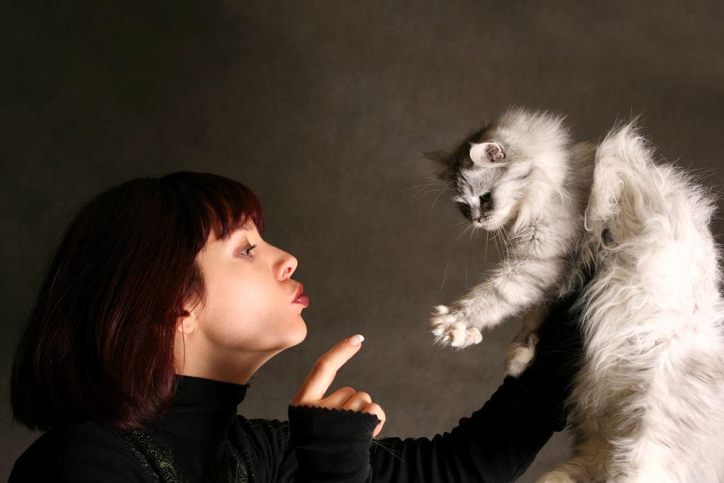 Jeste li i vi dozvolili da mačka vlada vašim životom?