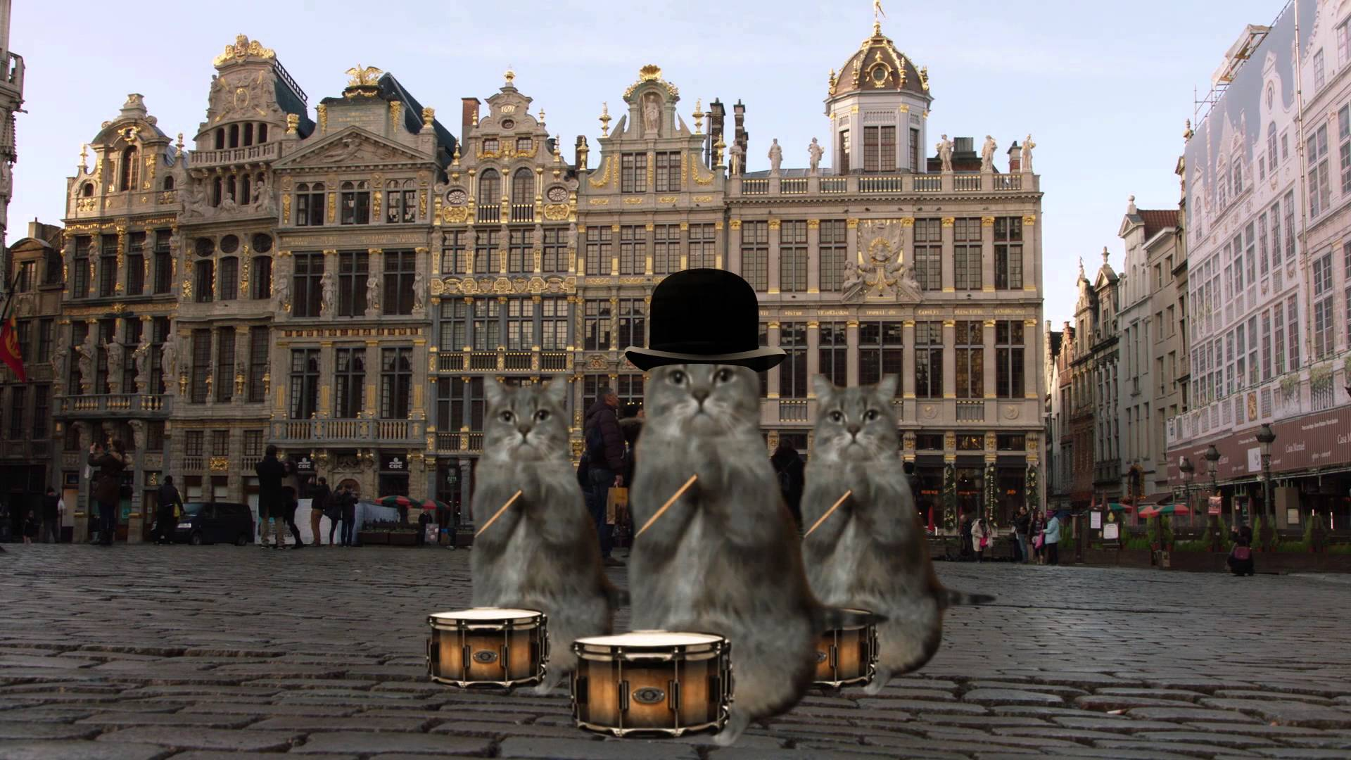 Kako vratiti turiste u Bruxelles? Mačjim videom, naravno!