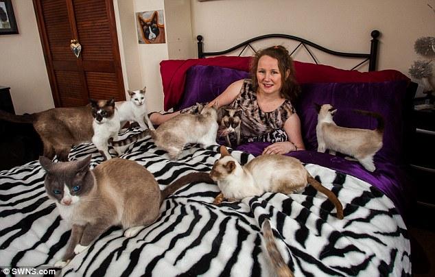 Zbog 35 mačaka se razvela