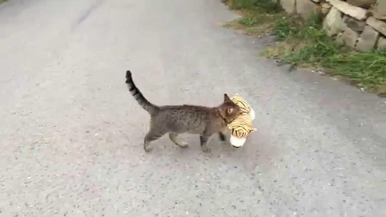 Kradljivac Timmy