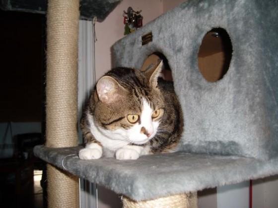 Mačak Anselmo ne gleda u objektiv