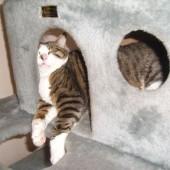 Mačak Anselmo spava