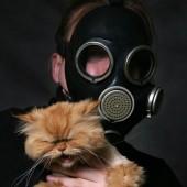 Mačka i neugodan miris