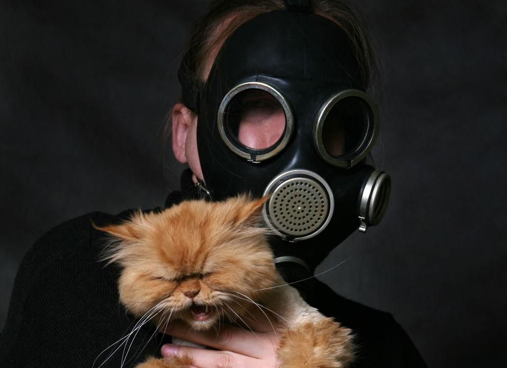 Zašto moja mačka čudno miriše?