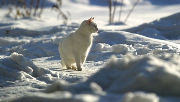 Mačke i hladno vrijeme
