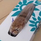 Mačka u kutiji maramica