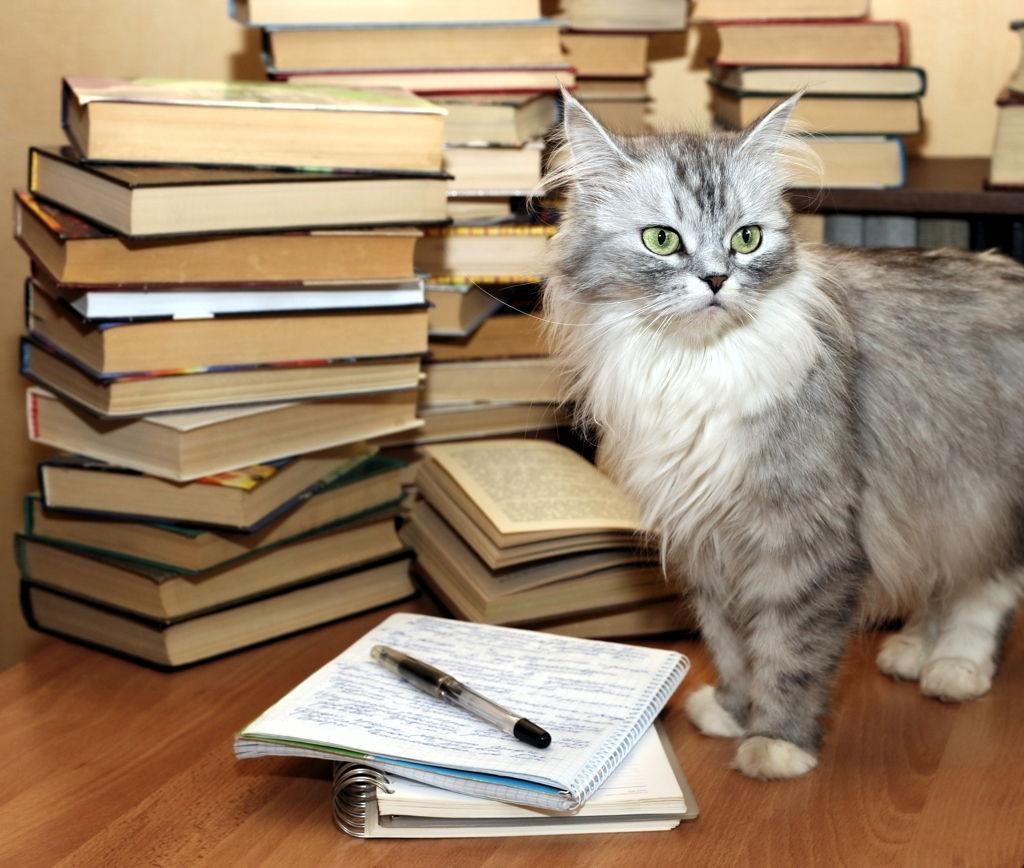 Test: je li vaša mačka genijalka?