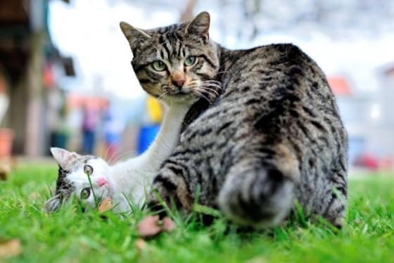 Fotografija mačaka