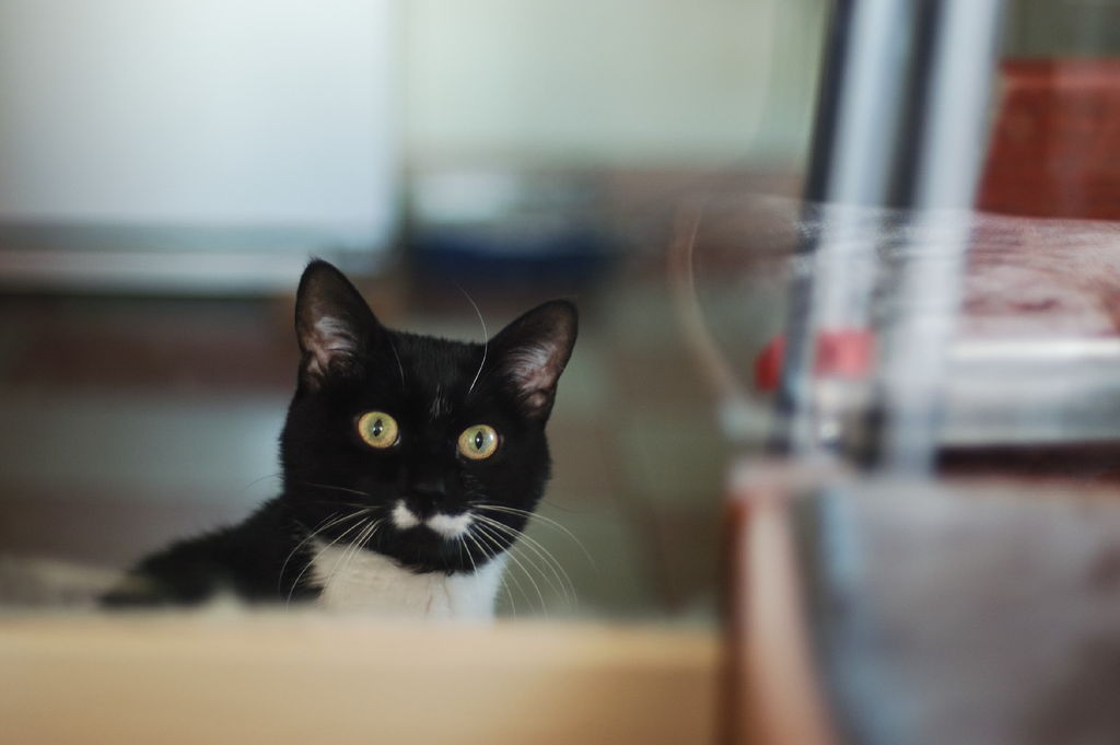 Njemačka vlada: kastrirajte mačke ili ih držite na vodilicama!