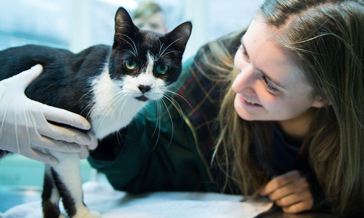 Mačak se vratio kući nakon 7 godina!