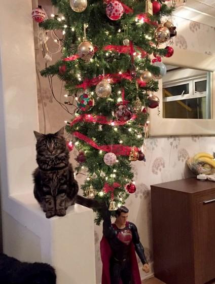 Mačak Storm - neprijatelj božićnih jelki