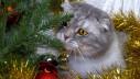 Božićna jelka i mačke – kako biti siguran?