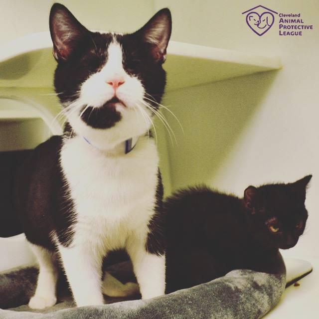 Slijepi mačak dobio vodiča – drugu mačku!