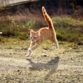 Mačka u trku