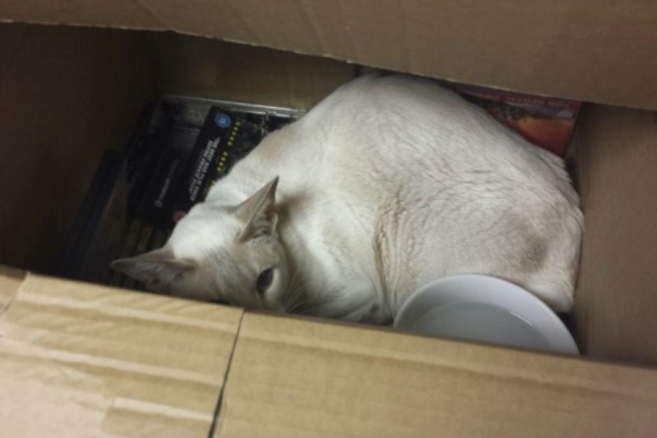 Vlasnica slučajno poštom poslala svoju mačku!