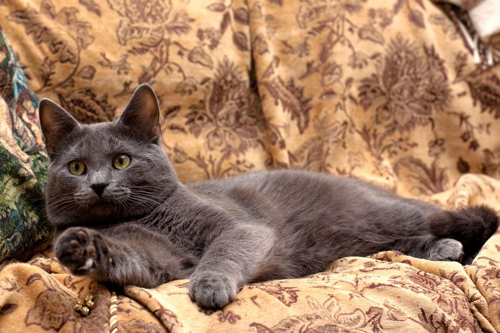 Znanstvenici otkrili pet najčešćih mačjih osobnosti