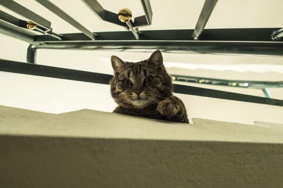 Otvorena mačka