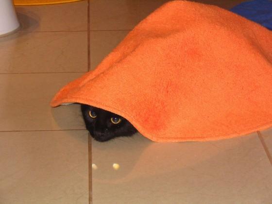 Plaha mačka