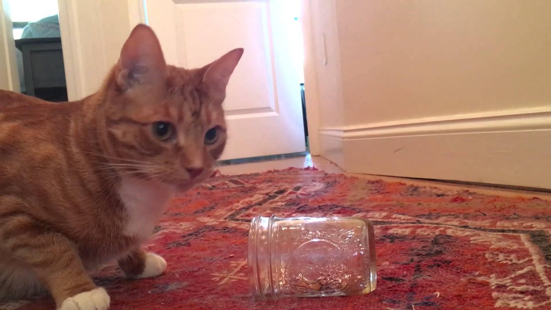Je li vaša mačka ljevakinja ili dešnjakinja?
