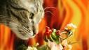 Ailurofobija – strah od mačaka