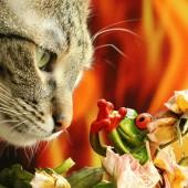 Ailurofobija - strah od mačaka
