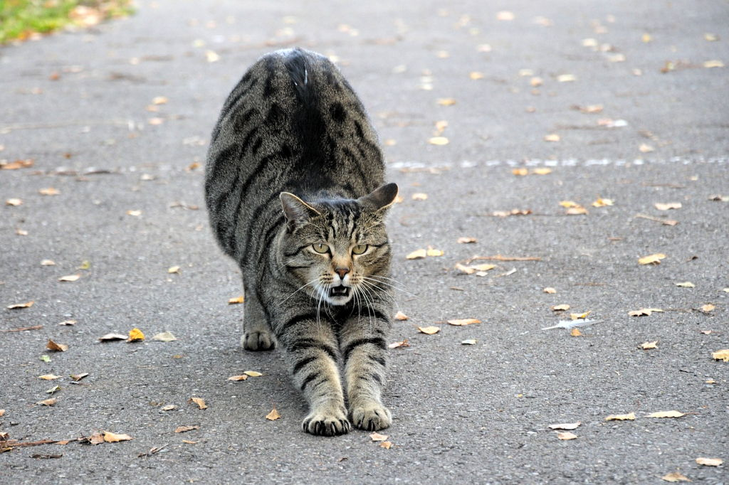 Mačka se rasteže