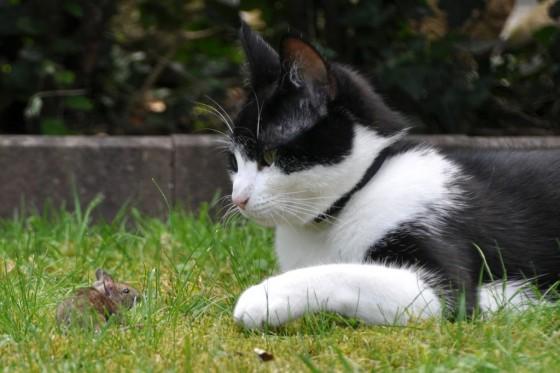 Miš i mačka