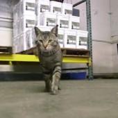 Zaposlene mačke