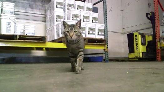 Program koji mačkama daje siguran dom i – posao