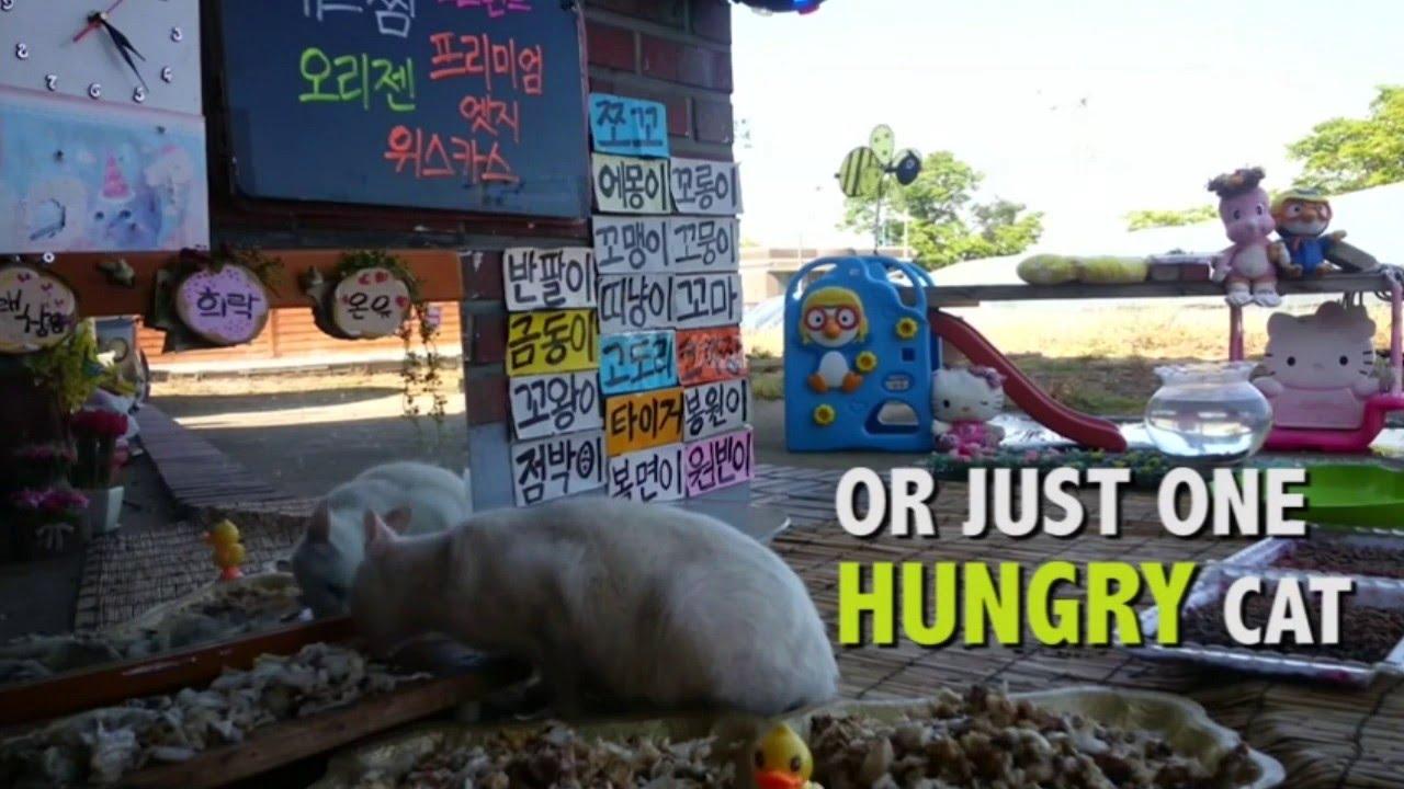 Južnokorejski TV reality – mačke lutalice
