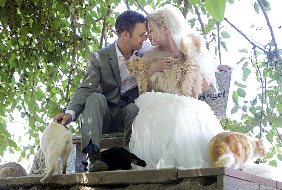 Vjenčanje pred tisuću mačaka
