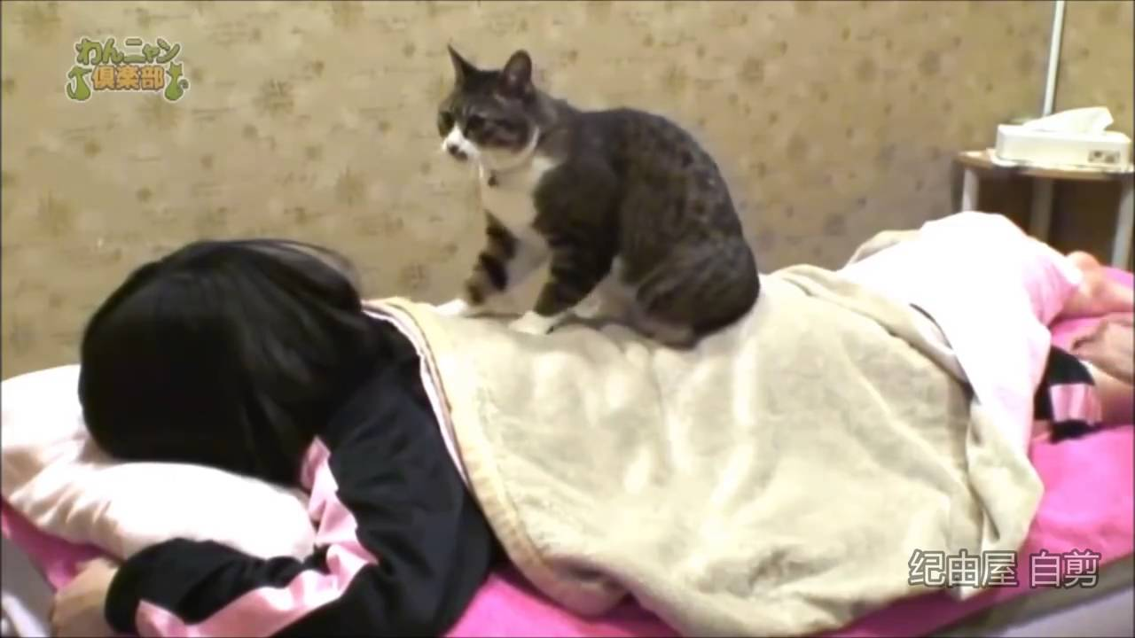 Japanski spa nudi masažu koju izvodi mačka