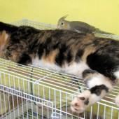 Mačke i ptice